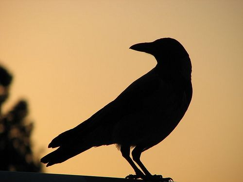 A corvid of some kind...most likely a crow.