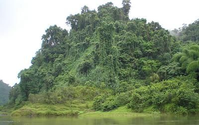 Navua river jungle: This was one of the coolest places I've stayed at. The Navua upriver lodge.