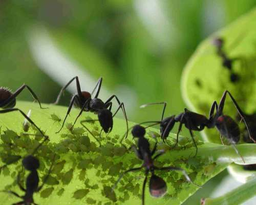 Se você tem um jardim, sabe que as formigas podem ser o inseto mais destruidor que existe, mas não precisamos usar produtos químicos para mantê-las longe