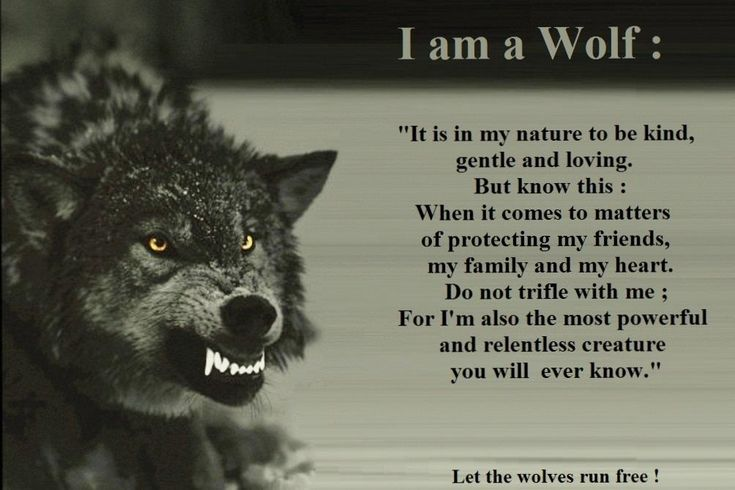 I'm a wolf