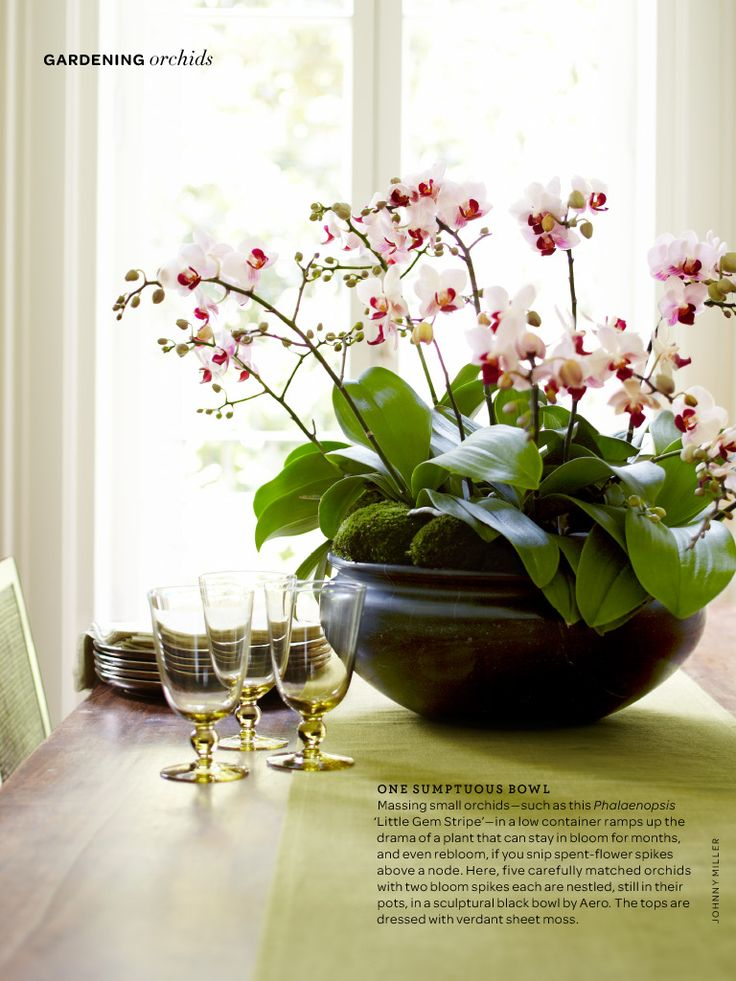 Orchid Display Ideas - Bing images