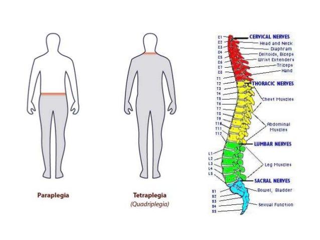 93 best MUSCOLATURA del corpo umano images on Pinterest ...