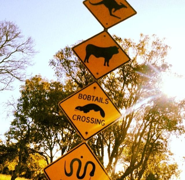Road signs in Australia! #Australia #Travel #Inspiration #Wildlife