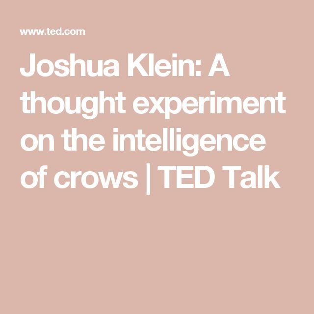 Joshua Klein: A thought experiment on the intelligence of crows | TED Talk
