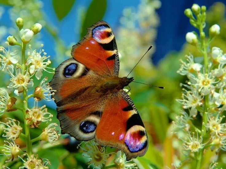 Absolutely gorgeous!  It has eyes on it's back wings!