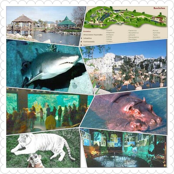 """Temaikèn: nada que envidiarle a Disney  Este inmenso e impresionante parque está ubicado en Escobar, a 50 km. de Buenos Aires, aunque realmente parezca estar ubicado en el primer mundo, recreando los hábitats de agua, tierra y aire.  En una Argentina devaluada, en donde pensar en viajar al exterior es algo reservado para unos pocos privilegiados, y donde uno ha aprendido cada vez más a """"conformarse con lo que hay"""", una visita a Temaikèn es sin dudas un oasis en medio del desierto.  A menos…"""