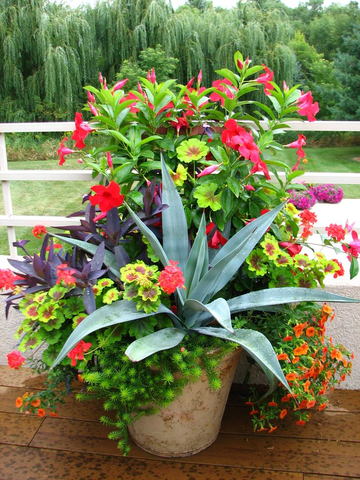 lovely container garden - Flower Garden Ideas In Pots