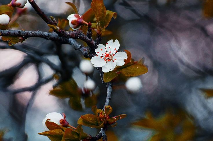 flower by Enikő Pécz on 500px