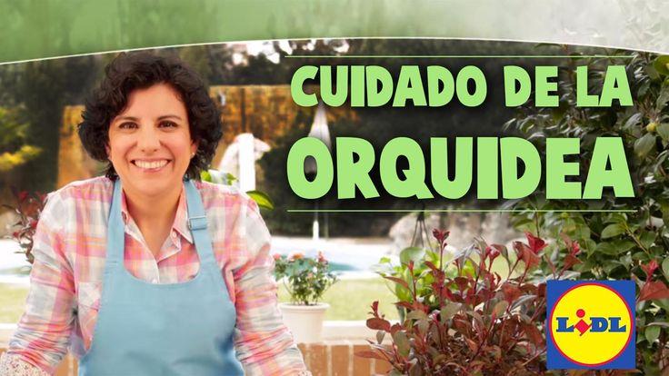 Cuidado De La Orquídea - Lidl Jardín