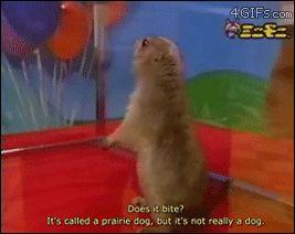 -Dramática de la pradera-perro