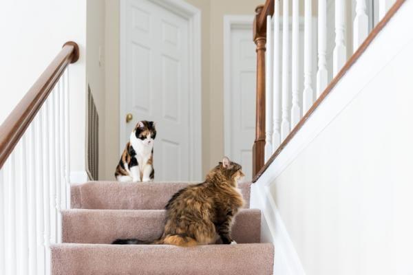 Cómo Hacer Que Un Gato Acepte A Otro Paso A Paso Fácil Gatos árbol Para Gato Casita Para Gatos