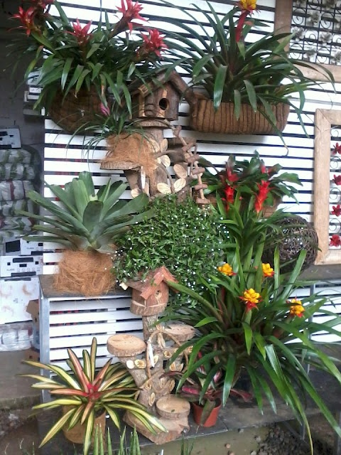 Maravilhosos arranjo de Bromélias... By Fênix Plantas e Jardins @fenixartdecor