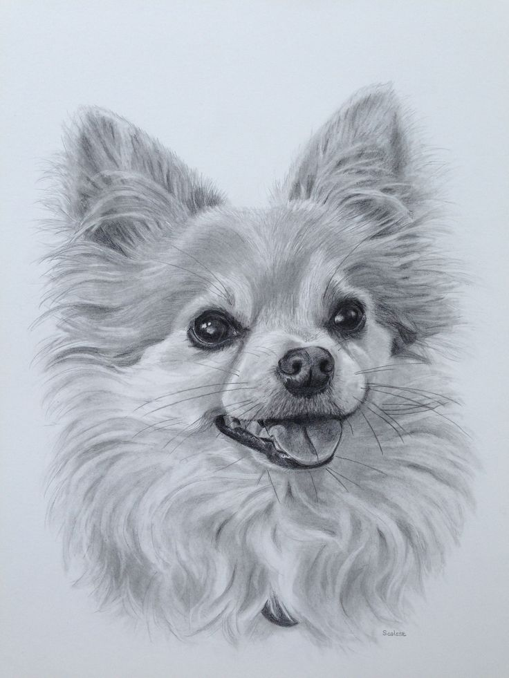 милые картинки собачек карандашом верхней