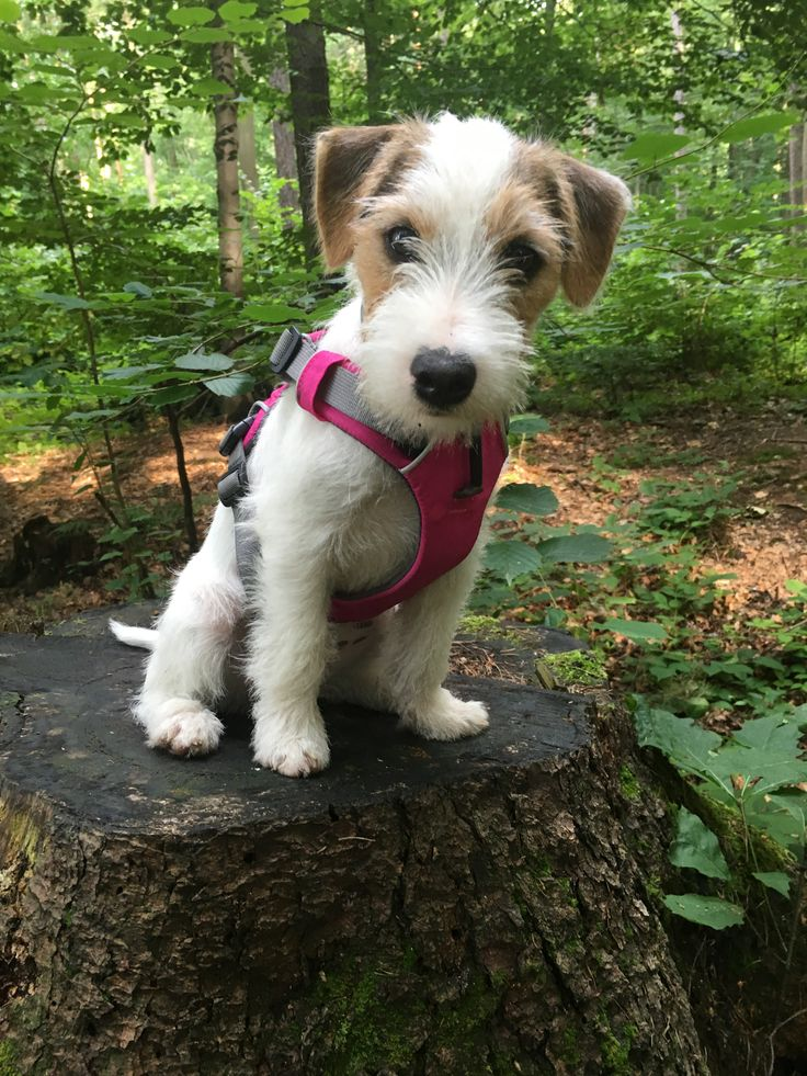 845 best Puppies of any breed images on Pinterest | Little dogs ...
