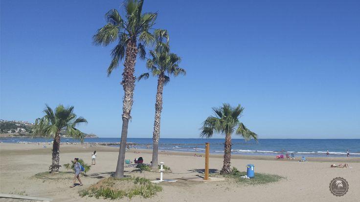 #Palmeras en la #playa #Almadrava de #Benicassim #Benicassimparaiso #azul #cielo #mar #verano #summer #palms #beach