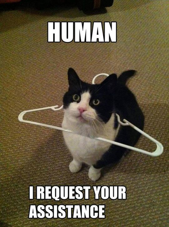 Human, I require your assistance. Reminds me of when my cat gets her teeth stuck in her collar when fighting it.