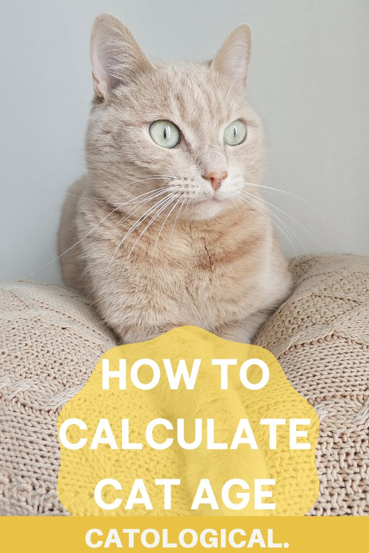How Long Do Cats Live? And How To Calculate Your Kitty's