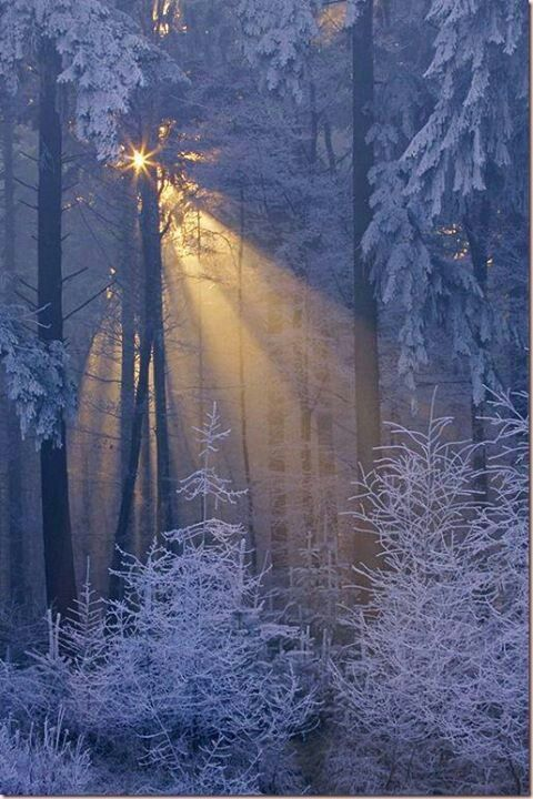 Silver white winters, you can almost smell the winter morning air