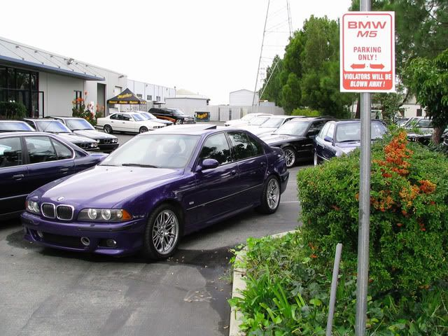 BMW E39 Velvet Blue (purple)