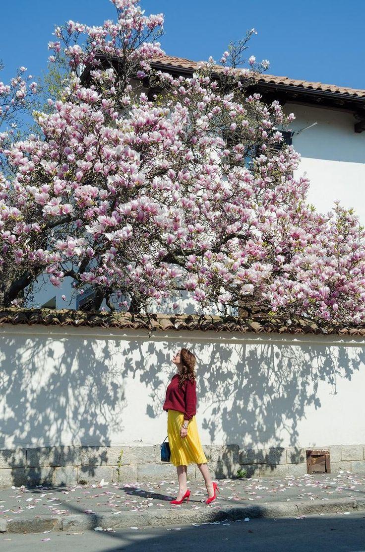 Burgundy Sweater / Yellow pleated skirt / Red stilettos / Made in Italia medium suede bag / Polariod sunglasses  Magnolia tree / Spring Style www.cristinafeather.com
