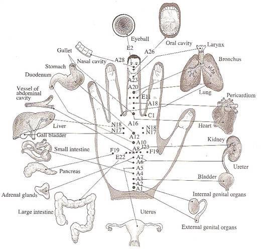 AC24.cz - Každý prst je spojen s 2 orgány. Tato japonská metoda léčí do pár minut