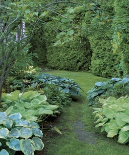 529 best Hostas and ferns images on Pinterest Garden ideas