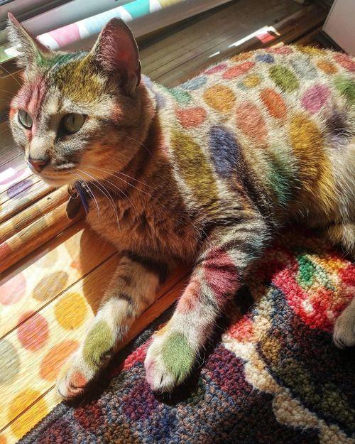 「窓ガラスにカラフルなシールを貼ったら…寝そべった猫が絵本のキャラクターのようになった!」:らばQ