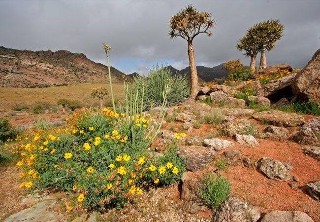Richtersveld Cultural and Botanical Landscape