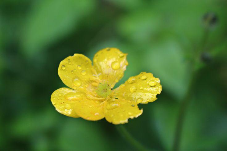 """Rainy day_happy yellow"""