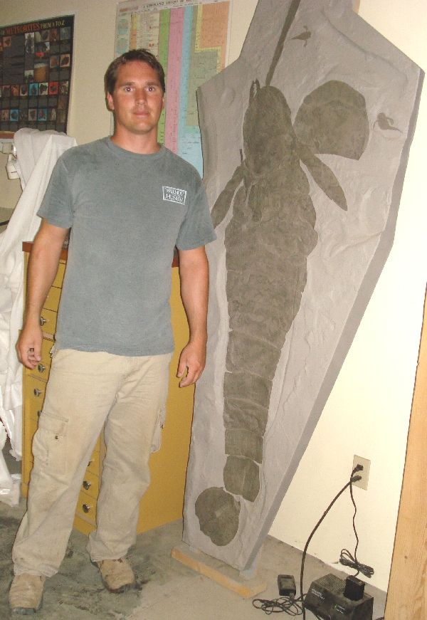 145 Best Fossils Images On Pinterest