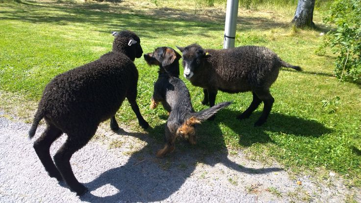 Lammaspoijaat