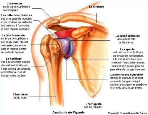 Douleur épaule droite