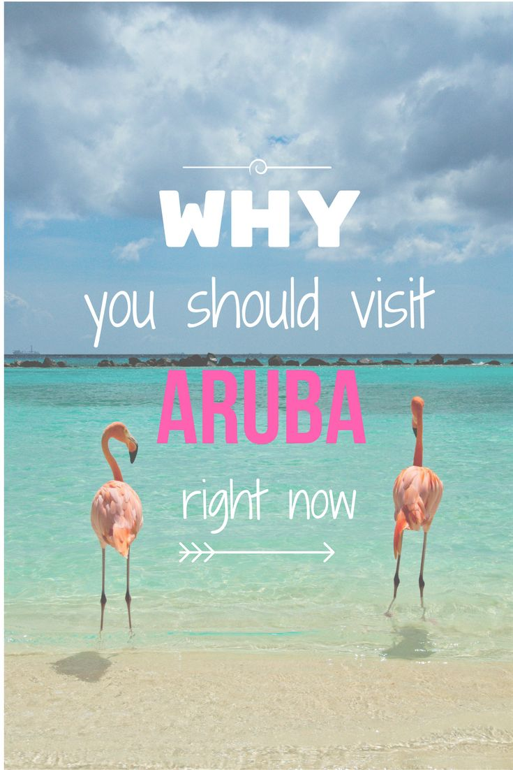 You just have to go to Aruba to see these lovely creatures! Awww! Just cute flamingos!