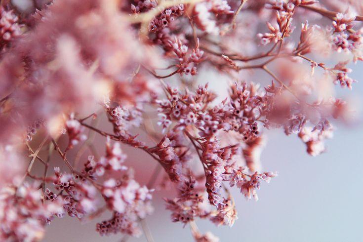 flower – Poulette Magique
