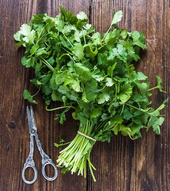how to preserve cilantro in oil