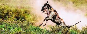 Afbeeldingsresultaat voor safari