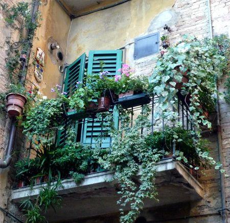 Creating An Outdoor Sanctuary Balcony PlantsPatio