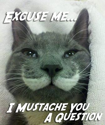 Today is Answer Your Cat's Question Day. But we think the ...