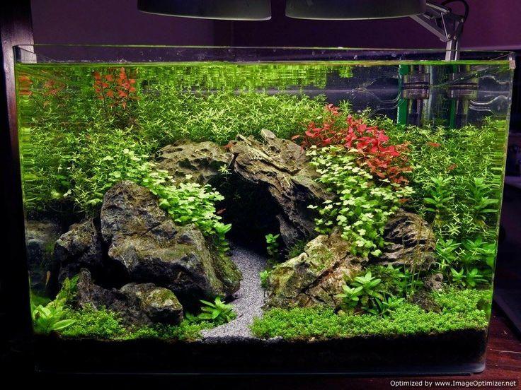 Aquascape By Xiaozhuang Wong