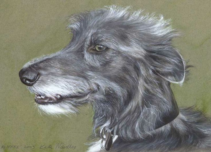 Watercolour Pet Portrait painted by me with signature name Kate Nockles