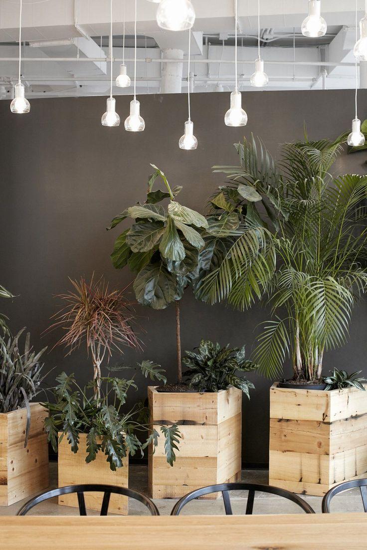 best best office plants images on pinterest