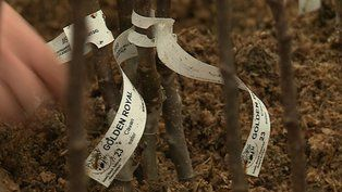 Irish Seed saver group faces funding crisis