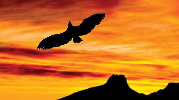Go on a sea eagle safari outside Bodø, Norway - Rune Nilsen