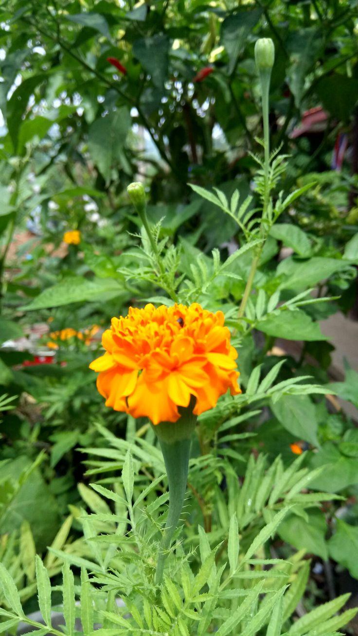 ดอกไม้งาม ย่อมเป็นที่หมายปอง     ของแมลง ภู่ ผึ้ง