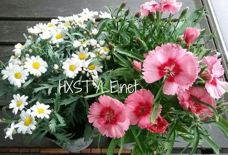KOTI&SISUSTUS, ULKOTILAT… PUUTARHA, PARVEKE Mini Narsessit, Ruukuissa olivat PÄÄSIÄSEN aikaan ensimmäiset kukat. SEURAAVAKSI Pientä pakkasta ja kylmää kestävät, ORVOKIT. Kuvassa ol…