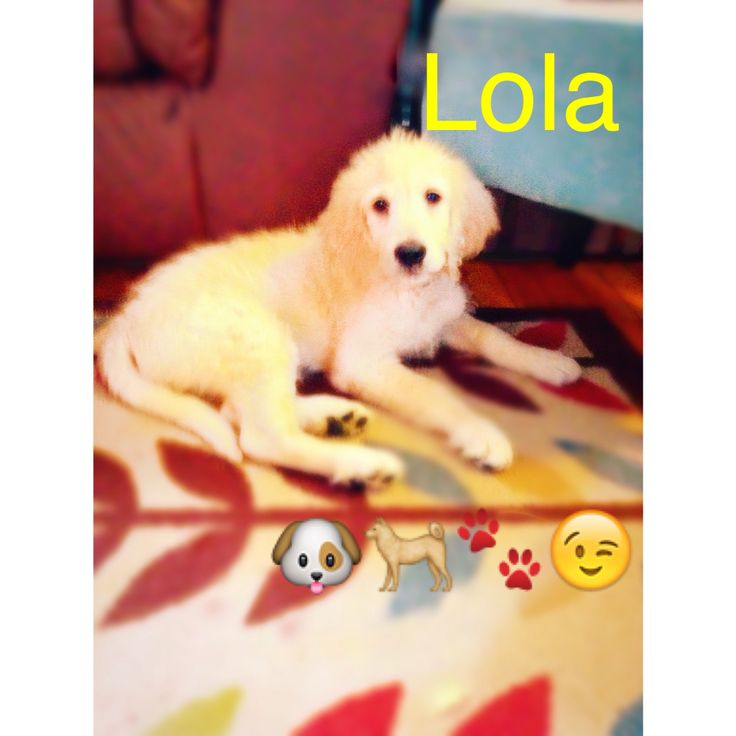 Lola <3