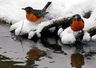 Σφοδρές χιονοπτώσεις και πολύ παγωνιά: Τι λένε τα μερομήνια για τον φετινό χειμώνα