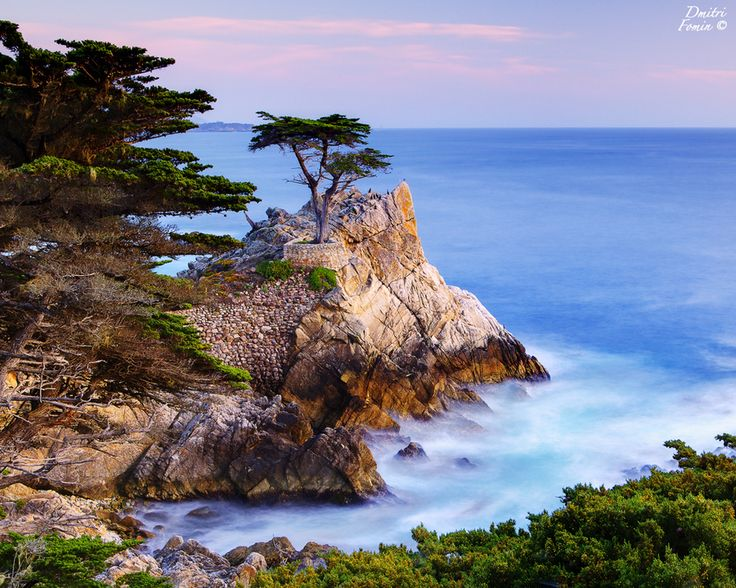 Lone Cypress -   This is a famous place along the 17 mile drive south of Carmel, CA. Not too far from here they hold annual Pebble beach golf tournaments.  Photo by Dmitri Fomin