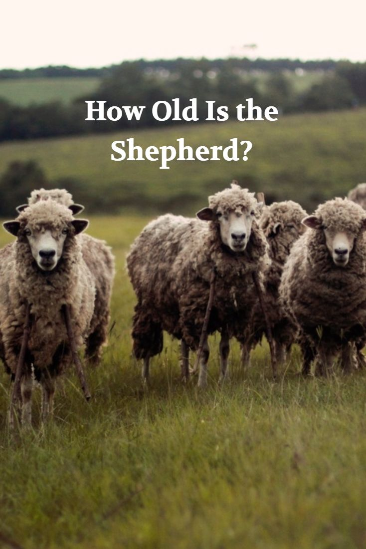 """How do you think 32 8th grade students would respond to this nonsensical question: """"There are 125 sheep and 5 dogs in a flock. How old is the shepherd?"""" Take a guess as to what percentage of them would give a numerical answer and then watch this video!"""