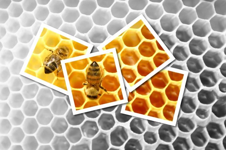 Patchwork d'abeilles, montage photo Gimp. Nevers, France.